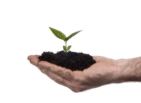 An outstretched hand with a new seedling ready to plant. Stock Photo