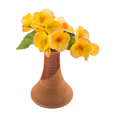Yellow flowers in vase isolated over white
