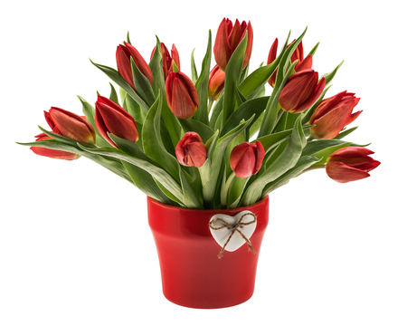 Red tulips in vase isolated over white Imagens