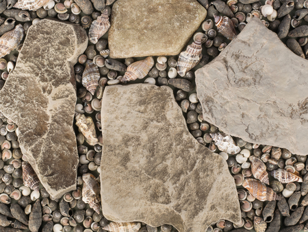 Marine texture - various seashells and stones