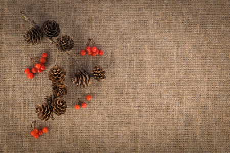 Composition of berries and branch with fir cones. Autumn concept