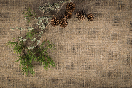 Composition of natural materials on linen background