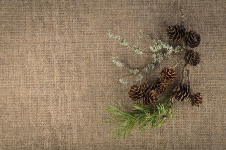 Composition of natural materials - pine branch, fir cones, moss