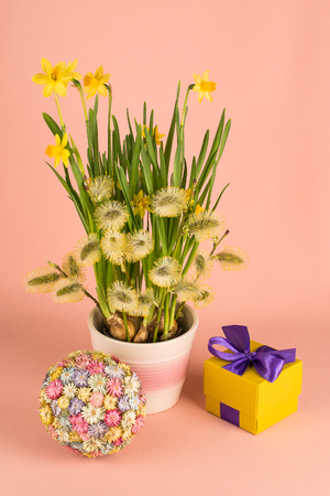 Festive composition with narcissus flowers, goat willow branches and gift box 스톡 콘텐츠
