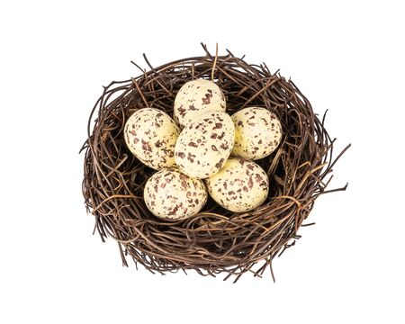 Bird's nest with small spotted eggs 스톡 콘텐츠