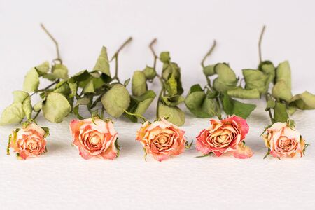 Dried rose flowers arranged in a row, blurred background