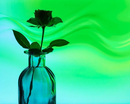 Rose flower silhouette in a glass vase 스톡 콘텐츠