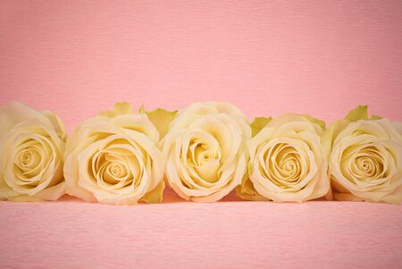 White rose flowers arranged in a row on pink background 스톡 콘텐츠