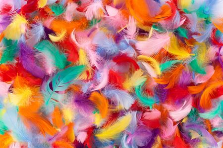 Abstract colorful background of small fluffy feathers 스톡 콘텐츠