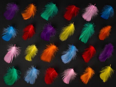 Vivid small feathers arranged in a row on black background