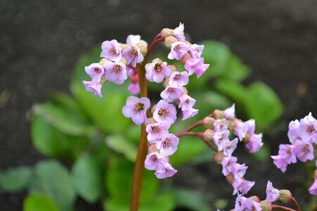 violett: beautiful violett flowers