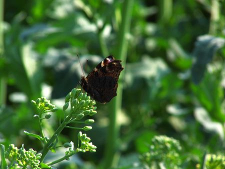 Butterfly at the spring-field photo