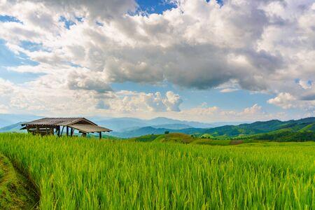pa: Pa Bong Piang rice paddy field in Chiang mai Thailand