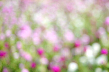 Blurred flowers bokeh