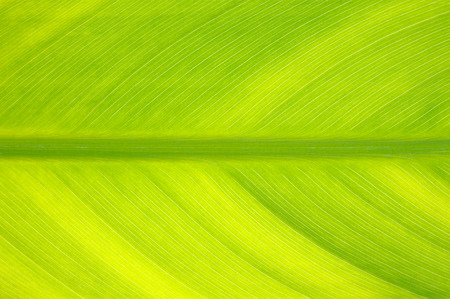 Green leaf abstact background