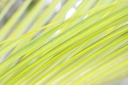light green leaf background 版權商用圖片