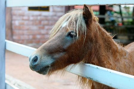 Horse in farm 版權商用圖片