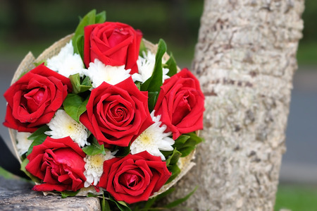 Red roses 版權商用圖片