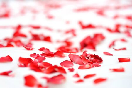 Red rose petals on white bed 版權商用圖片
