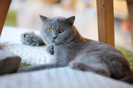 Gray cat relaxing on mattress 版權商用圖片