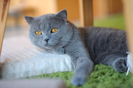 Gray cat relaxing on mattress Stok Fotoğraf