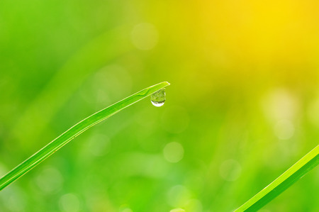 Water droplets on green leaf with sun rays and bokeh light background