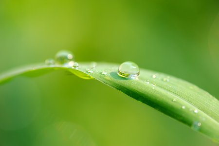 Water droplets on green grass natural background 版權商用圖片