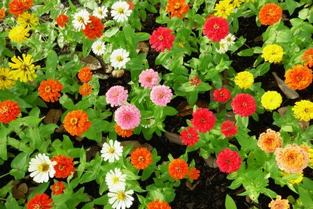 Colorful flowers in garden Stok Fotoğraf