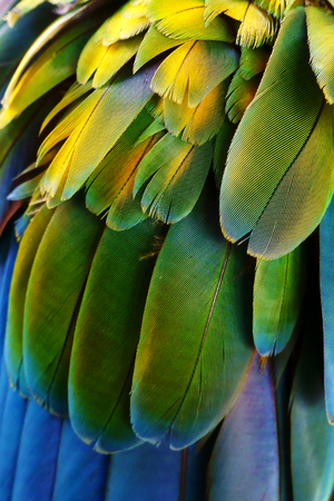 Close up of colorful feathers texture background 版權商用圖片
