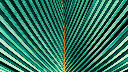 tropical palm leaf texture background, abstract green striped from nature,  vintage tone 版權商用圖片 - 94654618