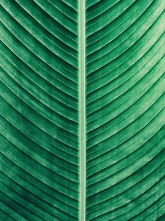 tropical green leaf texture background