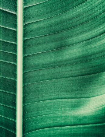 tropical palm leaf texture background