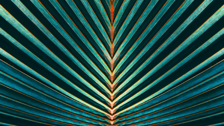 abstract blue stripes from nature, tropical palm leaf texture background, vintage tone Фото со стока