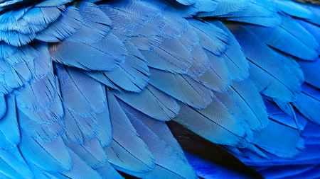 Close up of blue feathers texture background 版權商用圖片
