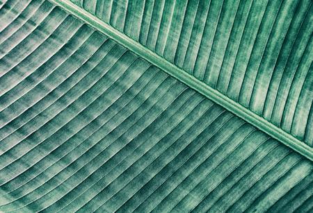 tropical palm leaf vein, nature dark green background