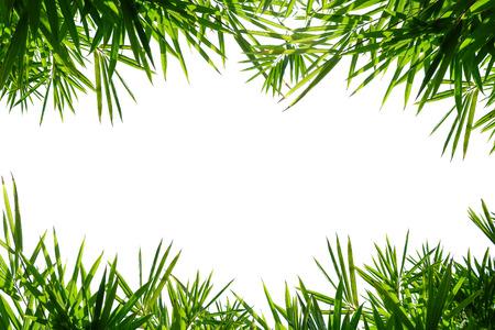 Bamboo leaf frame isolated on white background