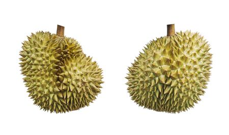 tropical fruit, durian isolated on white background, clipping path included