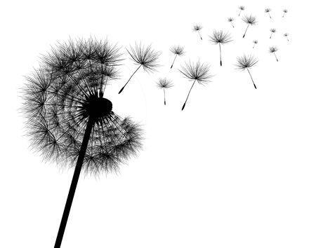 away: Dandelion
