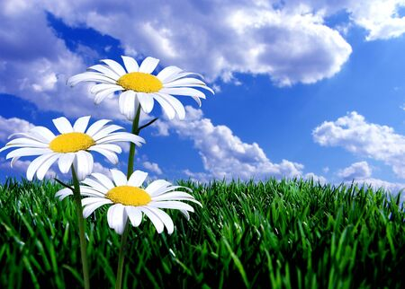 fresh green grass and flowers photo