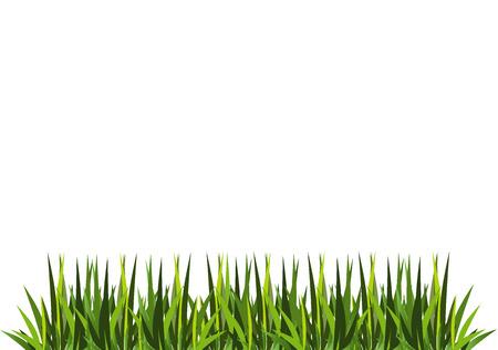 fresh green grass Vector