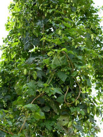 una imagen de saltos verdes frescos Foto de archivo