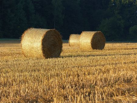 a image of Golden Hay Bales in the countryside  photo