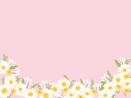gerbera: gerbera and tulip Illustration