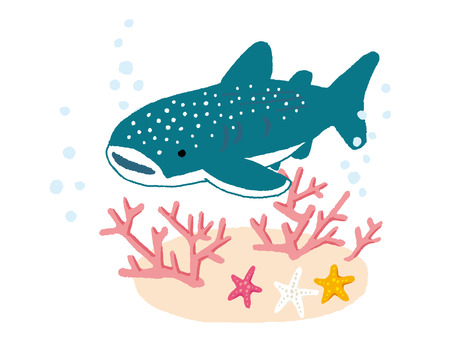 corals: Starfishes and corals and shark in water