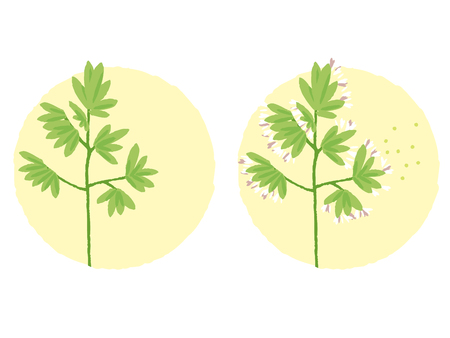 populated: blooming weeds, weed