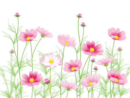 Pink flowers vector illustration.