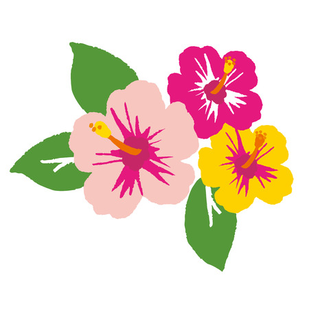 polynesia: Hibiscus flower. Vector illustration. Illustration