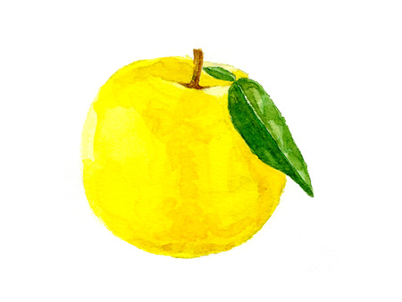 Japanese-style citron illustrations Stock Photo