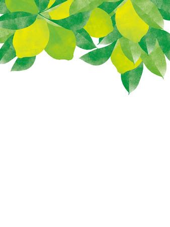 Natural organic juicy lemon tree branch background 스톡 콘텐츠
