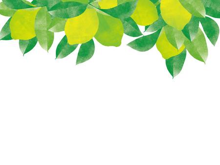 Natural organic juicy lemon tree branch background Banque d'images